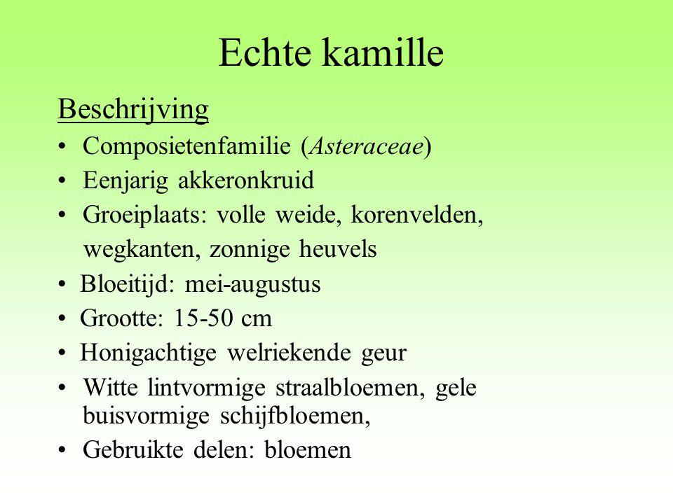Echte kamille Beschrijving Composietenfamilie (Asteraceae)