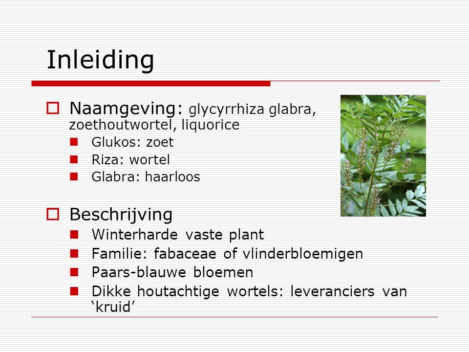 Inleiding Naamgeving: glycyrrhiza glabra, zoethoutwortel, liquorice