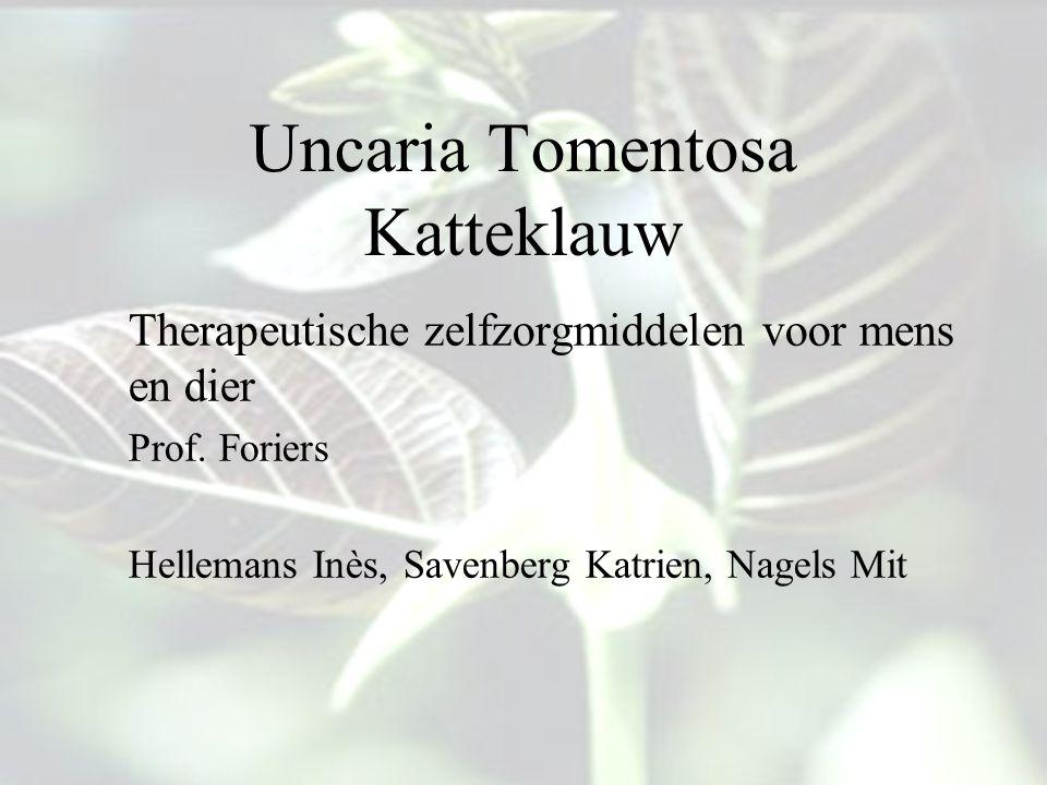 Uncaria Tomentosa Katteklauw