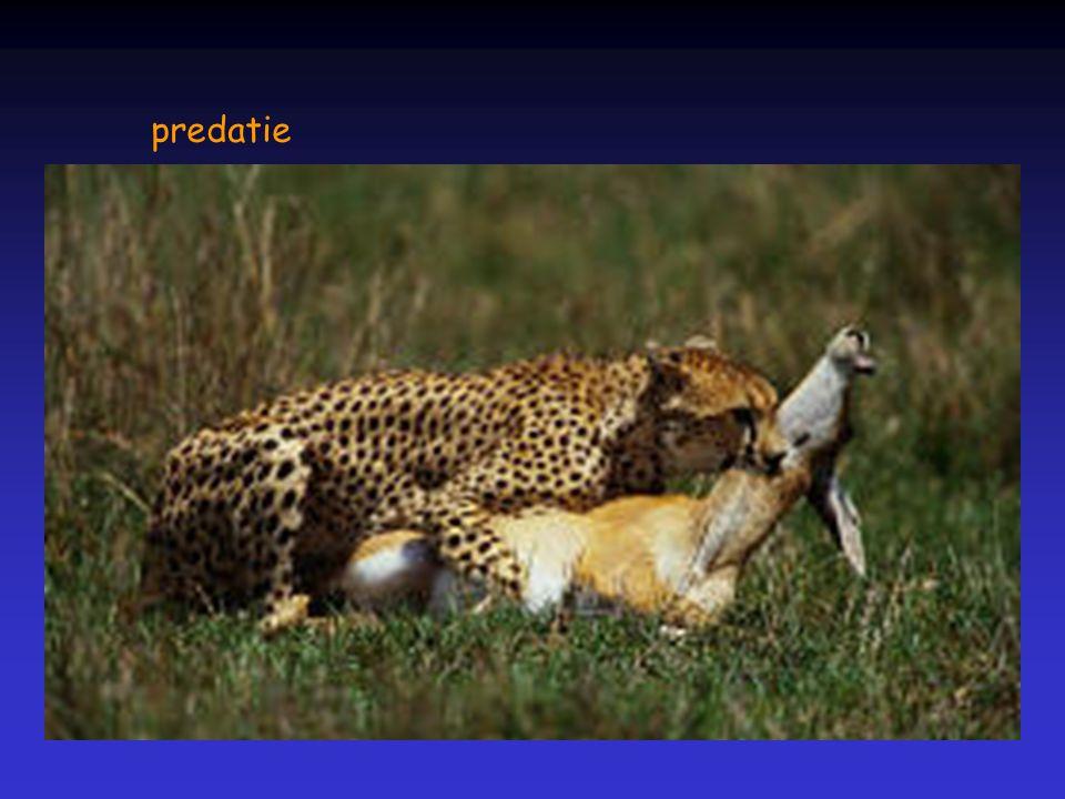 predatie