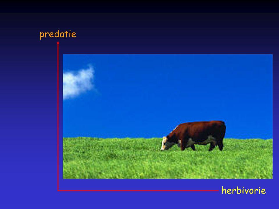predatie herbivorie