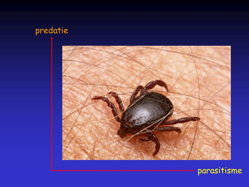 predatie parasitisme