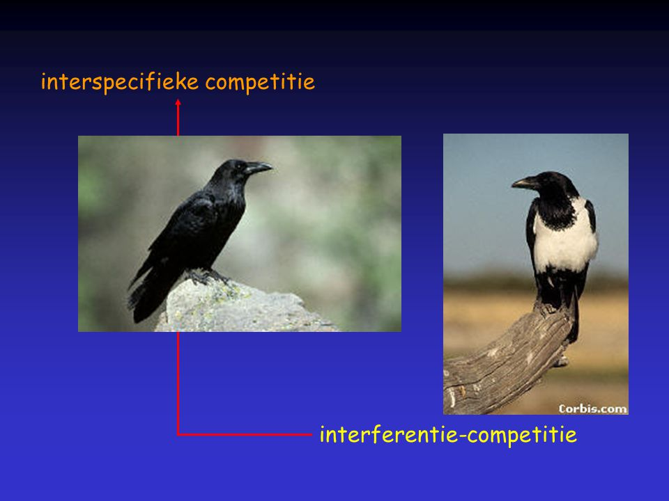 interspecifieke competitie