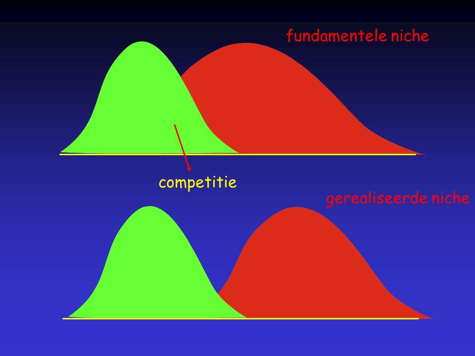 fundamentele niche competitie gerealiseerde niche