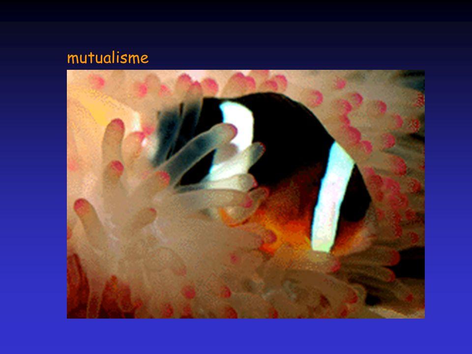 mutualisme