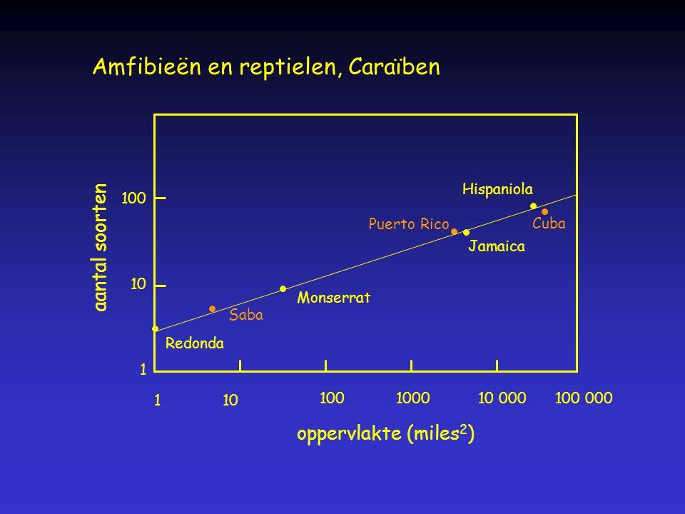 Amfibieën en reptielen, Caraïben