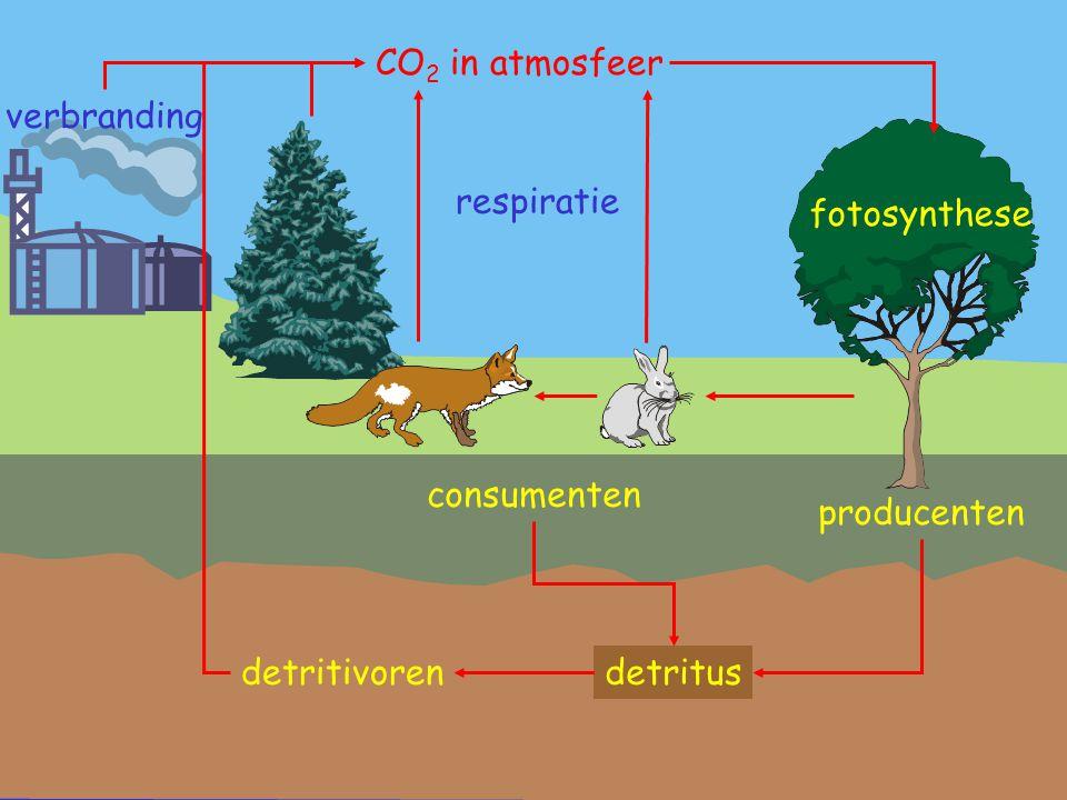 CO2 in atmosfeer verbranding detritivoren respiratie fotosynthese consumenten producenten detritus