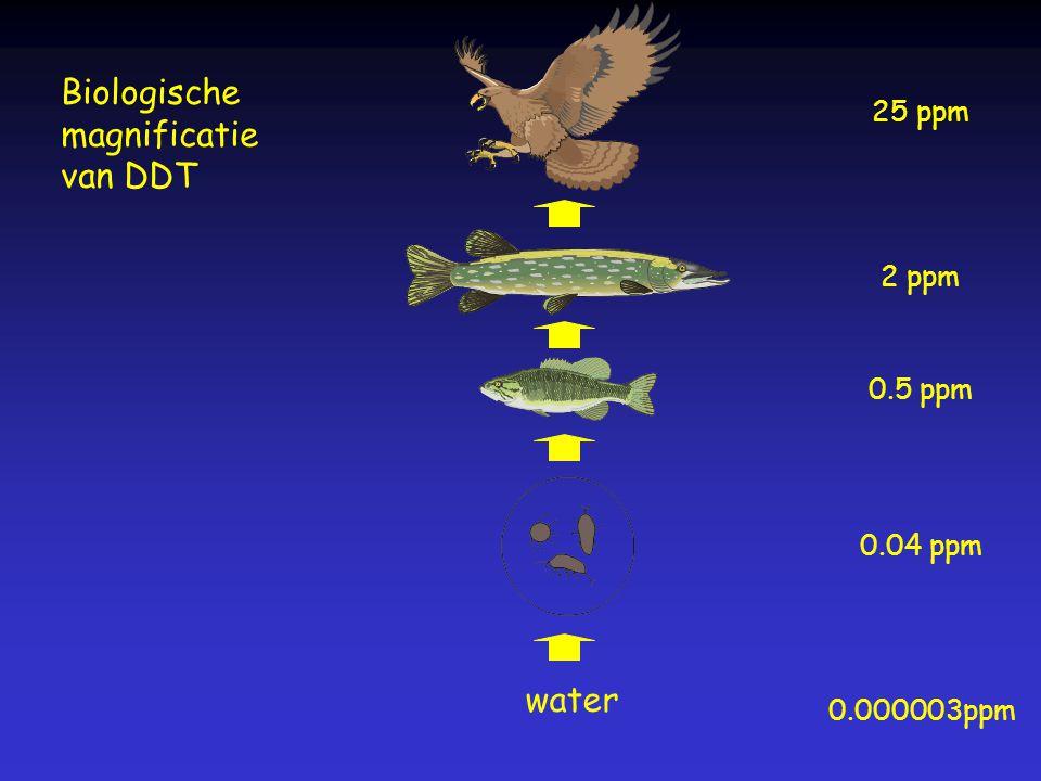 Biologische magnificatie van DDT water 25 ppm 2 ppm 0.5 ppm 0.04 ppm