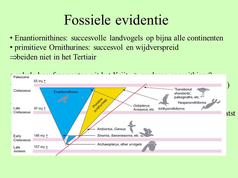 Fossiele evidentie Enantiornithines: succesvolle landvogels op bijna alle continenten. primitieve Ornithurines: succesvol en wijdverspreid.