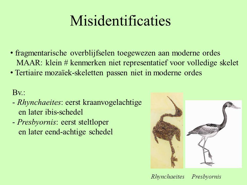 Misidentificaties fragmentarische overblijfselen toegewezen aan moderne ordes. MAAR: klein # kenmerken niet representatief voor volledige skelet.