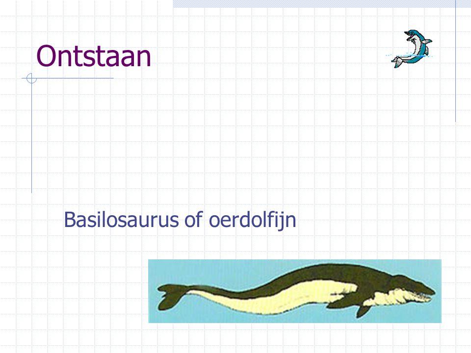Ontstaan Basilosaurus of oerdolfijn