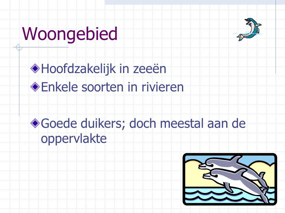 Woongebied Hoofdzakelijk in zeeën Enkele soorten in rivieren