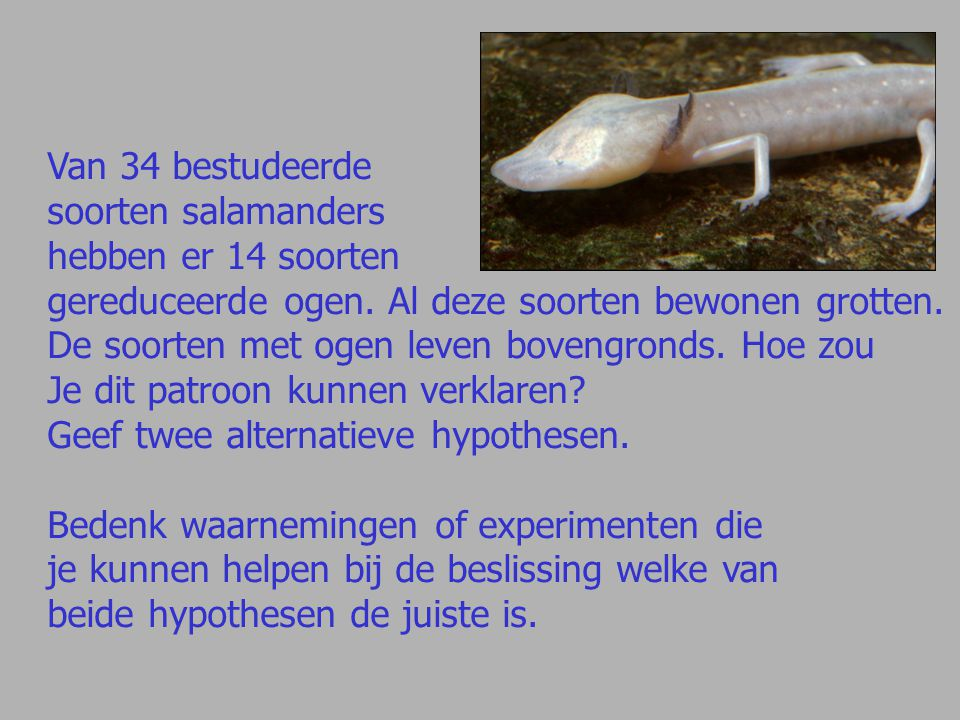 Van 34 bestudeerde soorten salamanders. hebben er 14 soorten. gereduceerde ogen. Al deze soorten bewonen grotten.