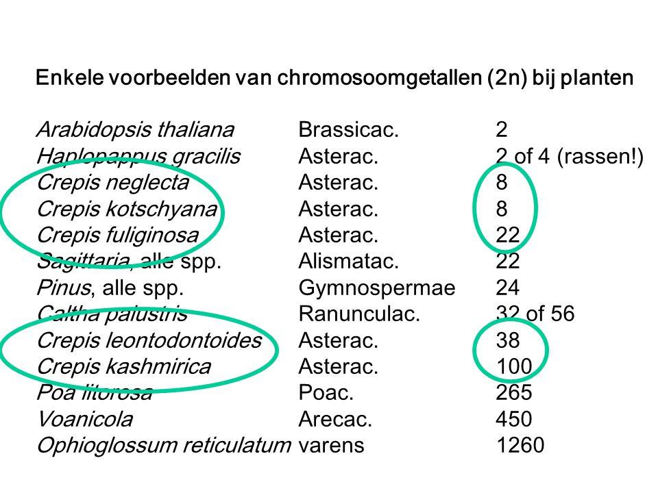 Enkele voorbeelden van chromosoomgetallen (2n) bij planten