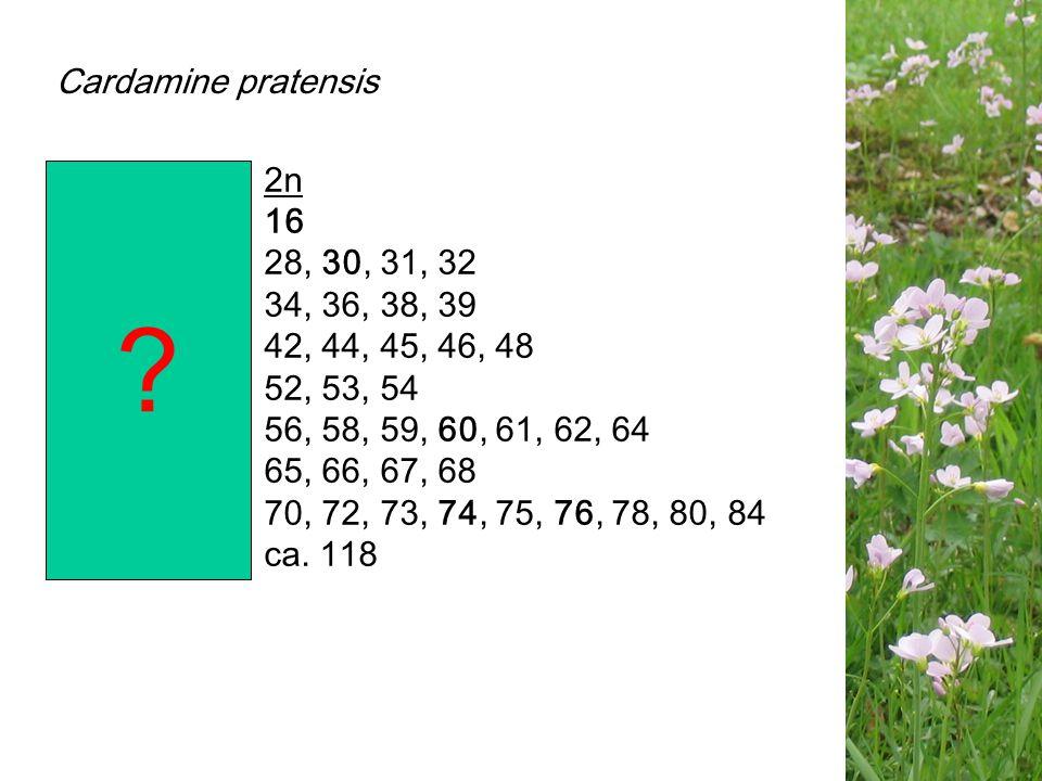 Cardamine pratensis ploïdie 2n di- 16 tetra- 28, 30, 31, 32