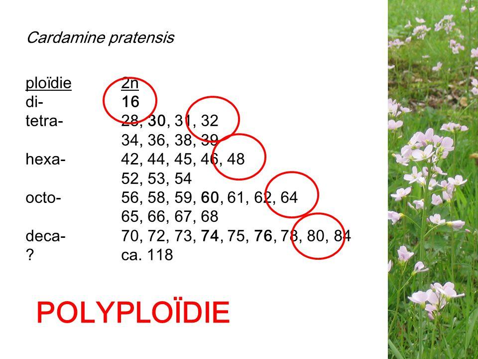 POLYPLOÏDIE Cardamine pratensis ploïdie 2n di- 16