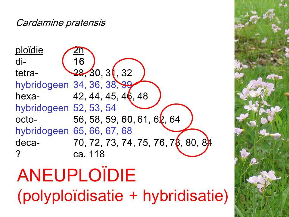 ANEUPLOÏDIE (polyploïdisatie + hybridisatie) Cardamine pratensis