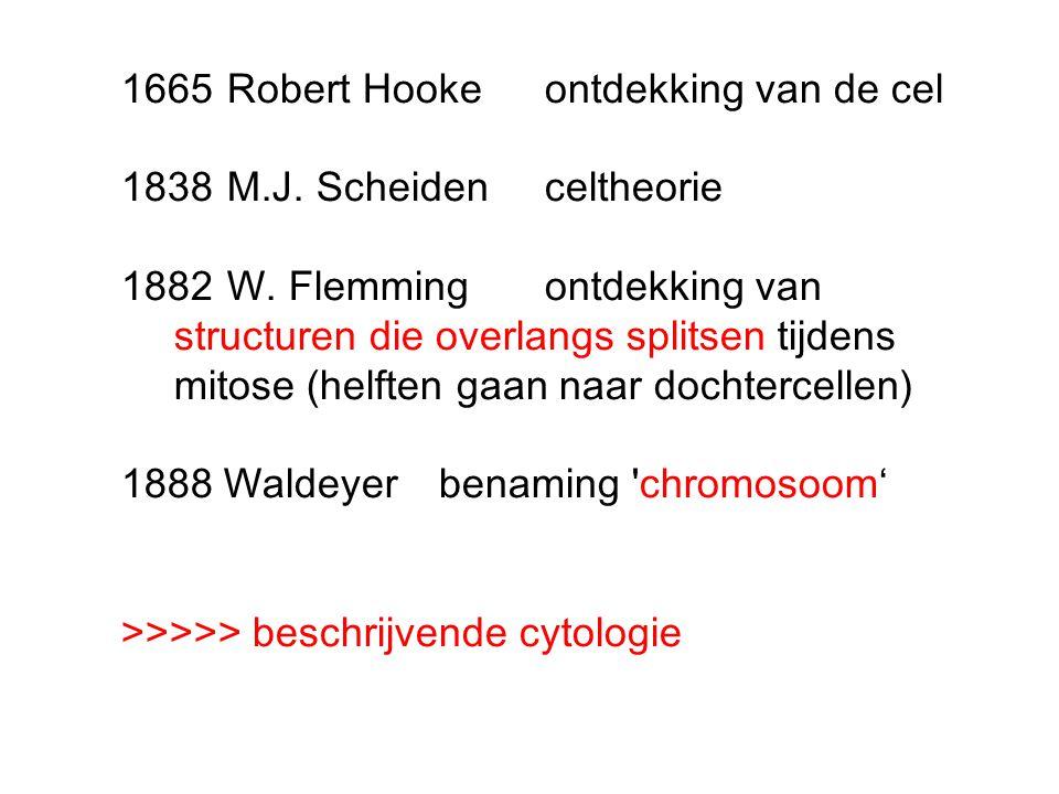 1665 Robert Hooke ontdekking van de cel