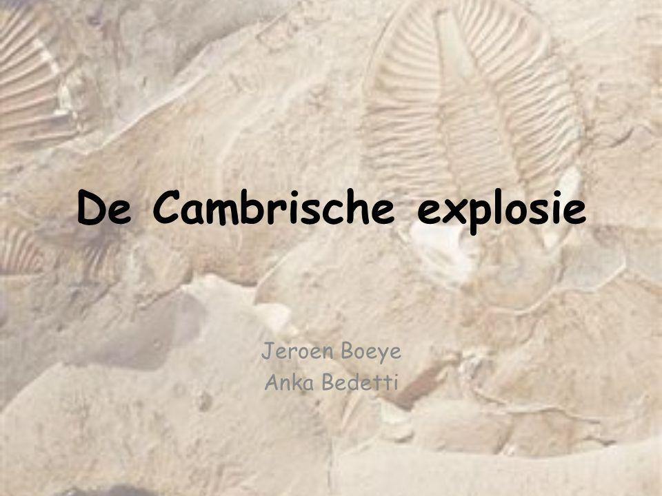 De Cambrische explosie