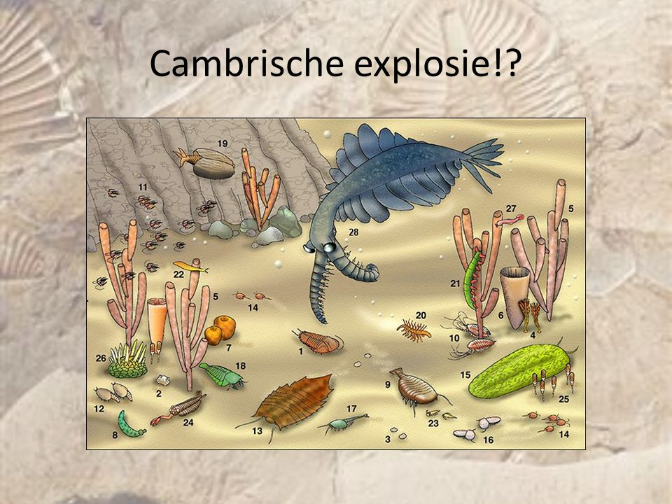 Cambrische explosie! Jeroen