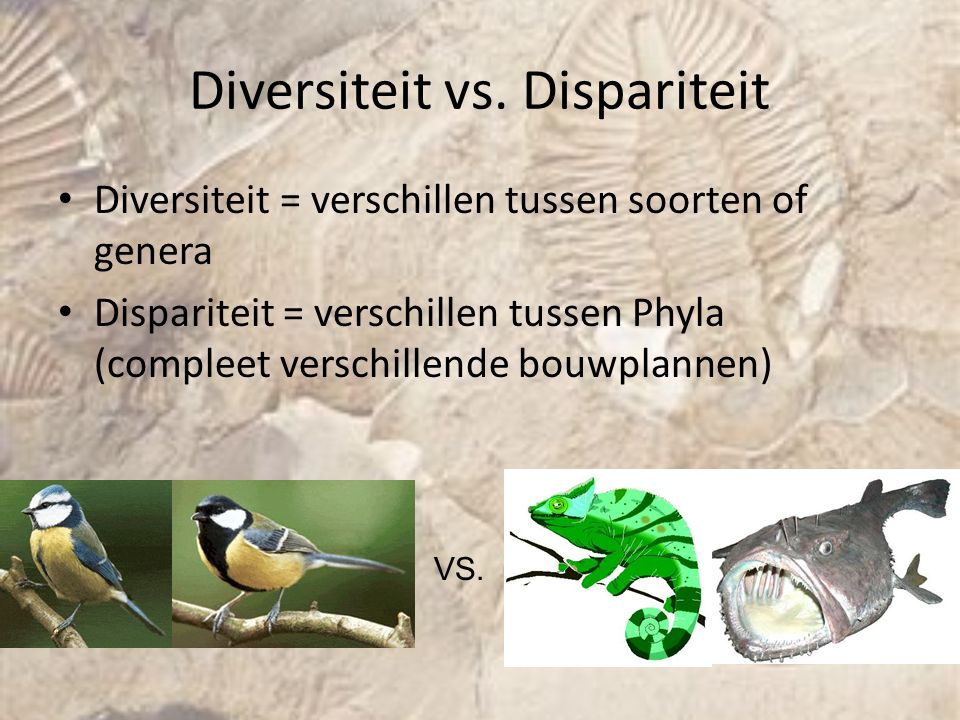 Diversiteit vs. Dispariteit