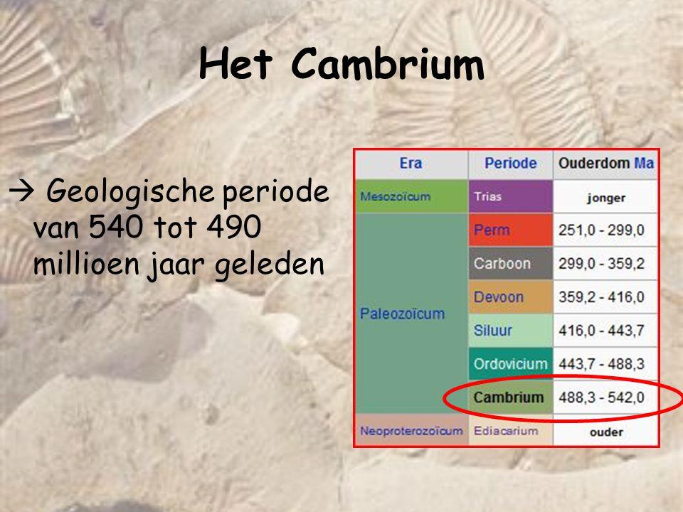 Het Cambrium  Geologische periode van 540 tot 490 millioen jaar geleden. Anka.
