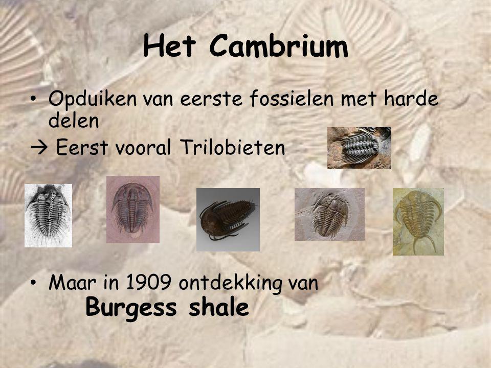 Het Cambrium Opduiken van eerste fossielen met harde delen
