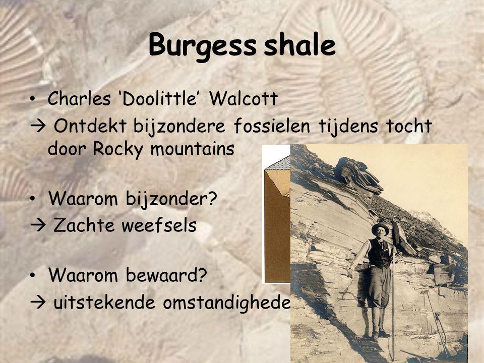 Burgess shale Charles 'Doolittle' Walcott