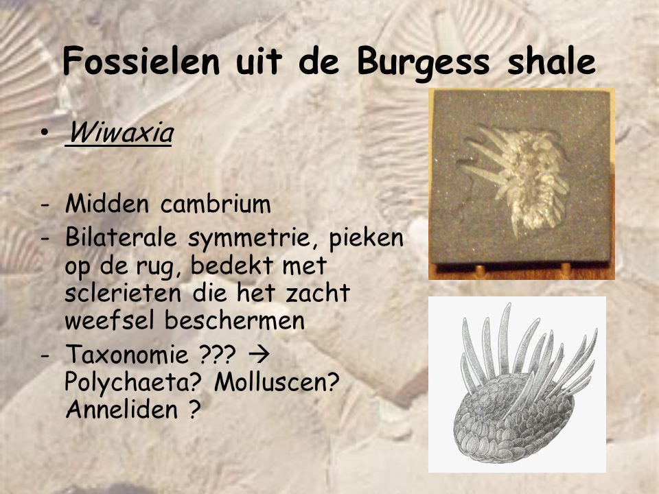Fossielen uit de Burgess shale