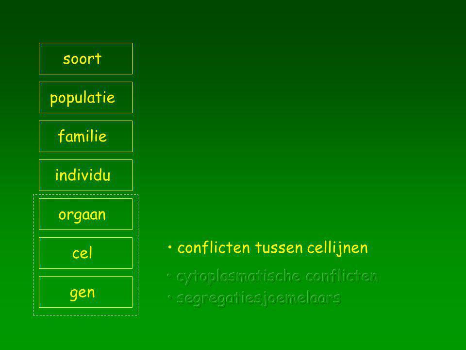 soort populatie. familie. individu. orgaan. conflicten tussen cellijnen. cel. cytoplasmatische conflicten.