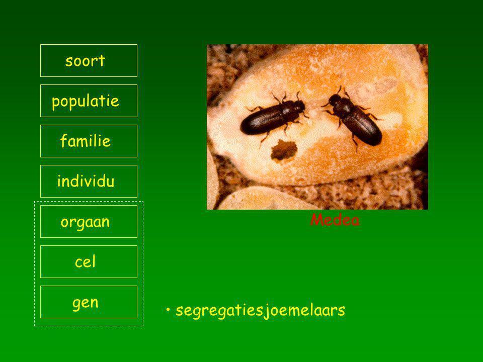 soort populatie familie individu orgaan Medea cel gen segregatiesjoemelaars