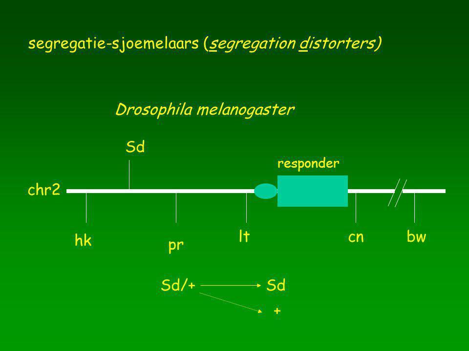 segregatie-sjoemelaars (segregation distorters)