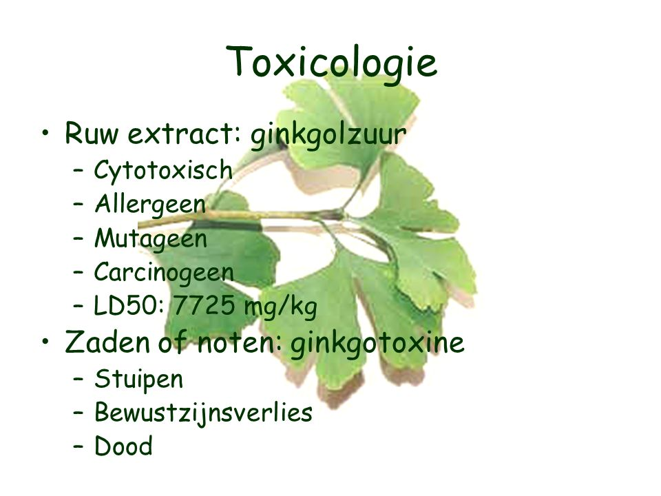 Toxicologie Ruw extract: ginkgolzuur Zaden of noten: ginkgotoxine