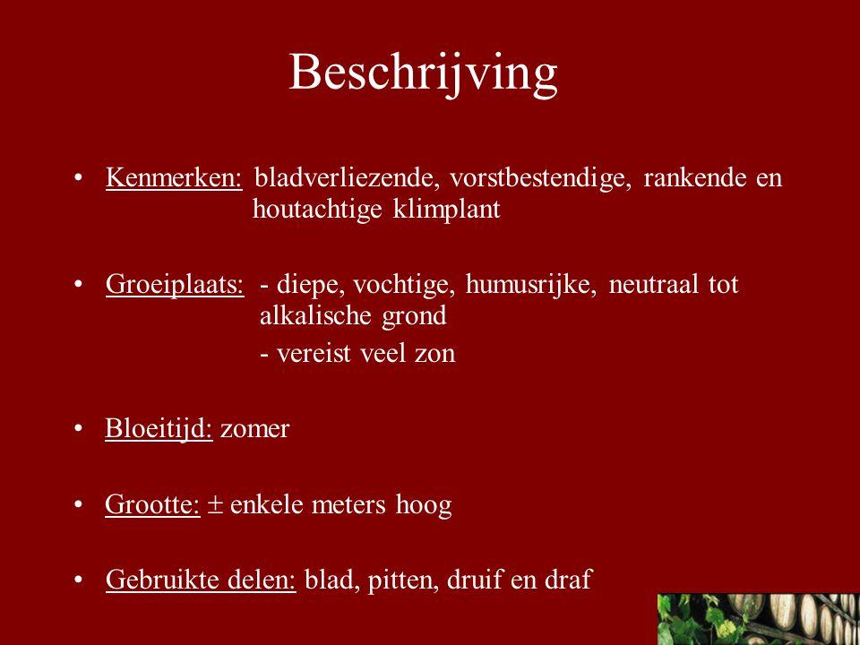 Beschrijving Kenmerken: bladverliezende, vorstbestendige, rankende en houtachtige klimplant.