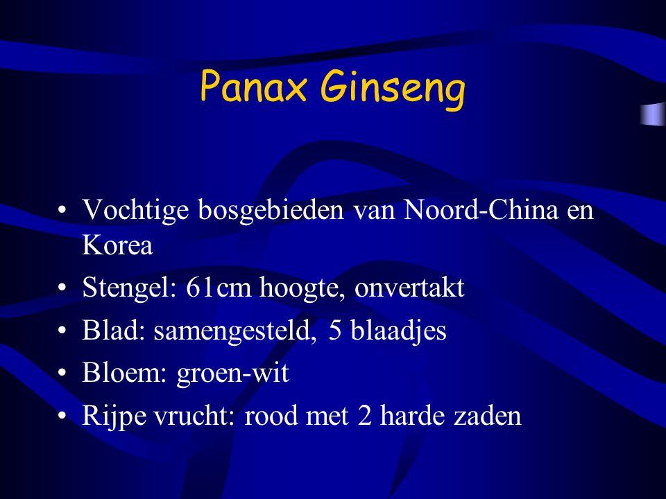 Panax Ginseng Vochtige bosgebieden van Noord-China en Korea