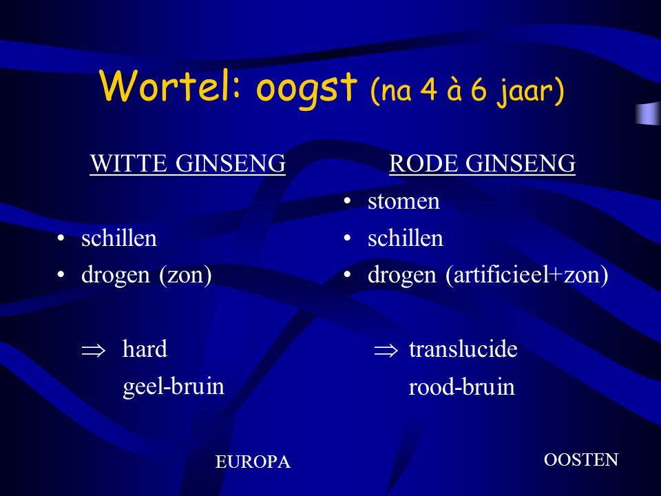 Wortel: oogst (na 4 à 6 jaar)