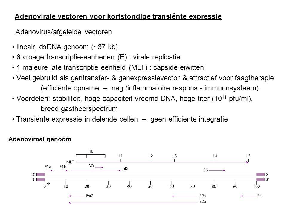 Adenovirale vectoren voor kortstondige transiënte expressie