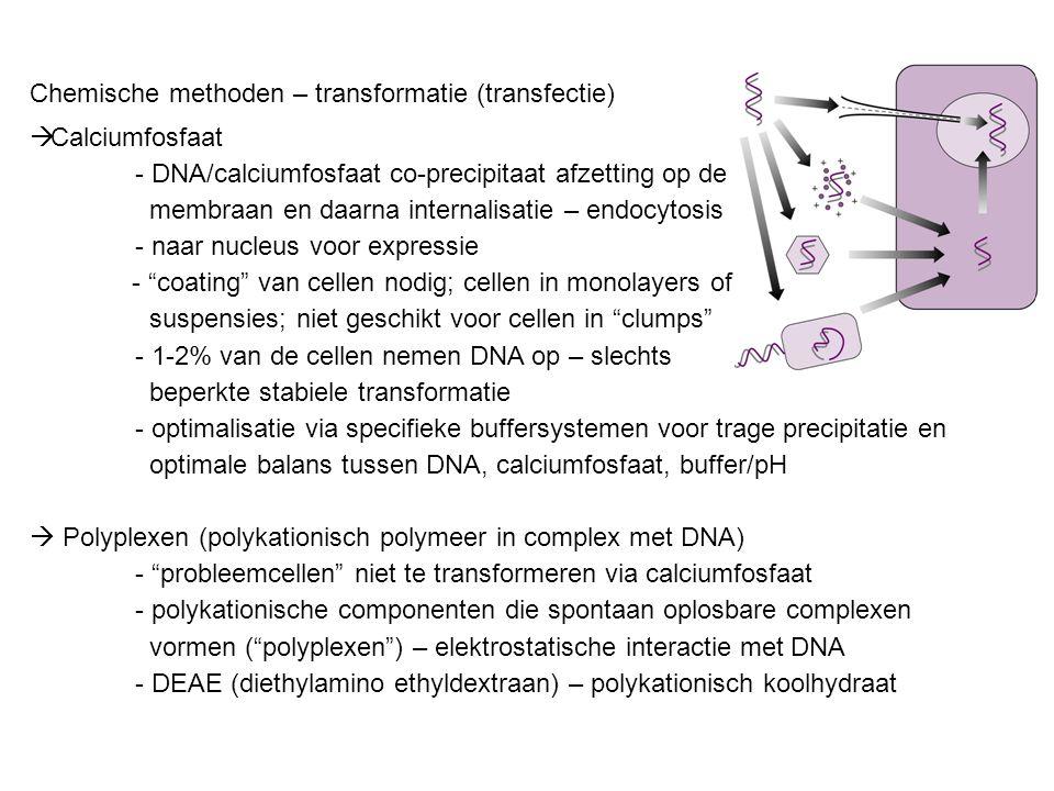 Chemische methoden – transformatie (transfectie)