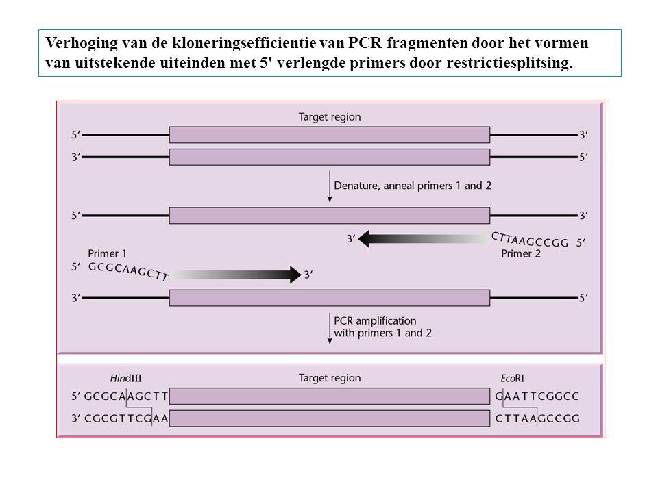 Verhoging van de kloneringsefficientie van PCR fragmenten door het vormen