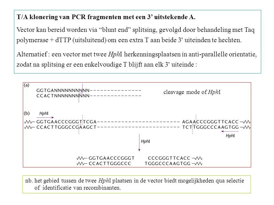 T/A klonering van PCR fragmenten met een 3' uitstekende A.