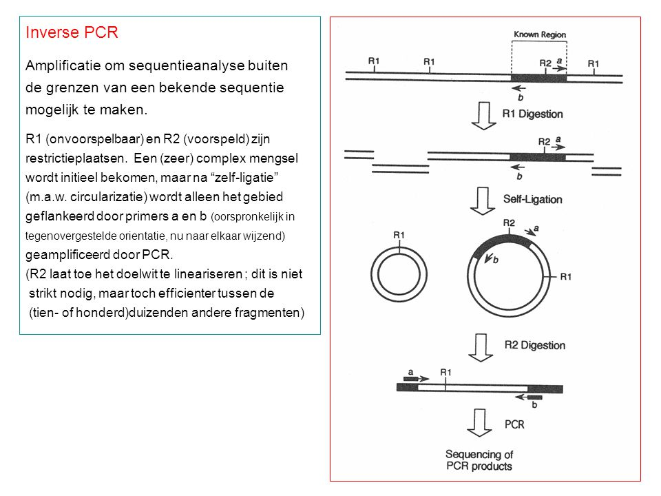 Inverse PCR Amplificatie om sequentieanalyse buiten