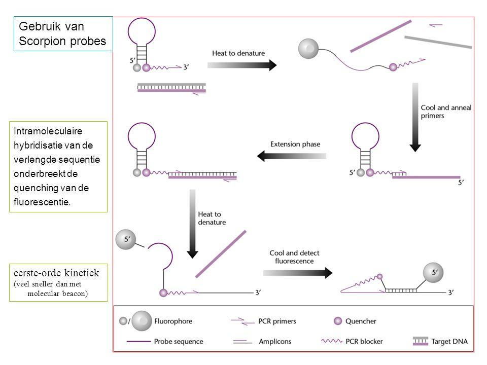 Gebruik van Scorpion probes eerste-orde kinetiek Intramoleculaire