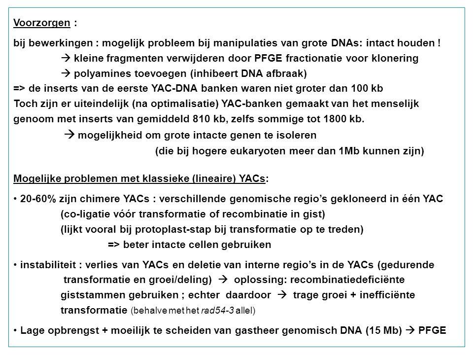 Voorzorgen : bij bewerkingen : mogelijk probleem bij manipulaties van grote DNAs: intact houden !