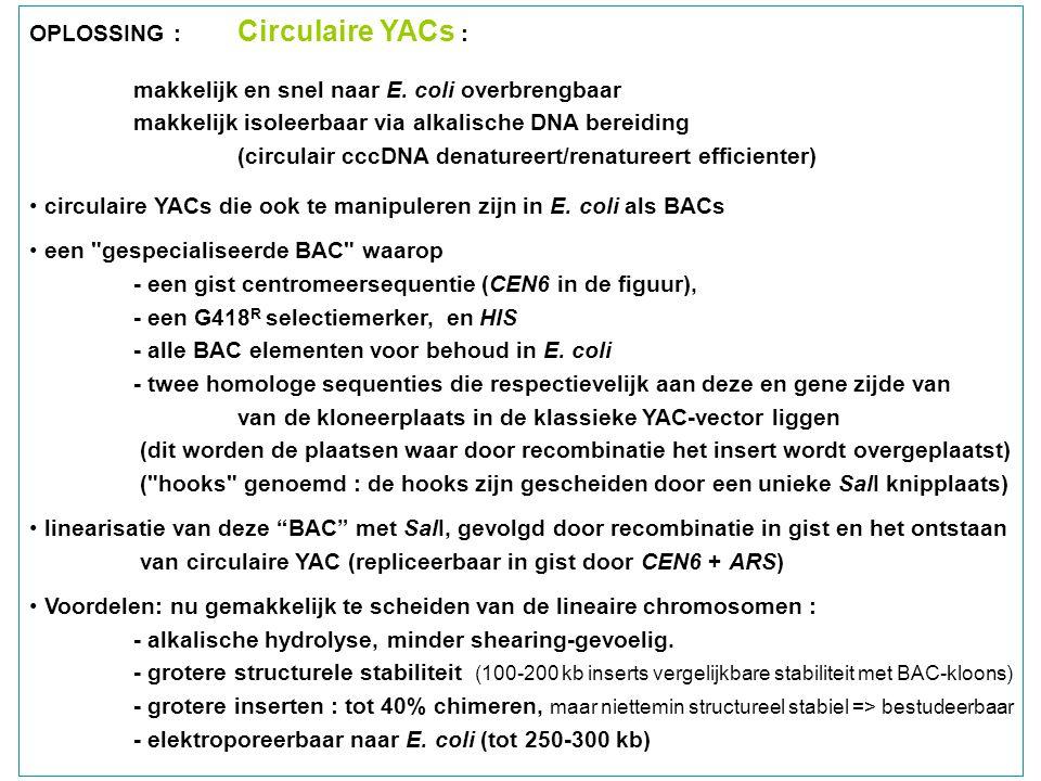 OPLOSSING : Circulaire YACs :