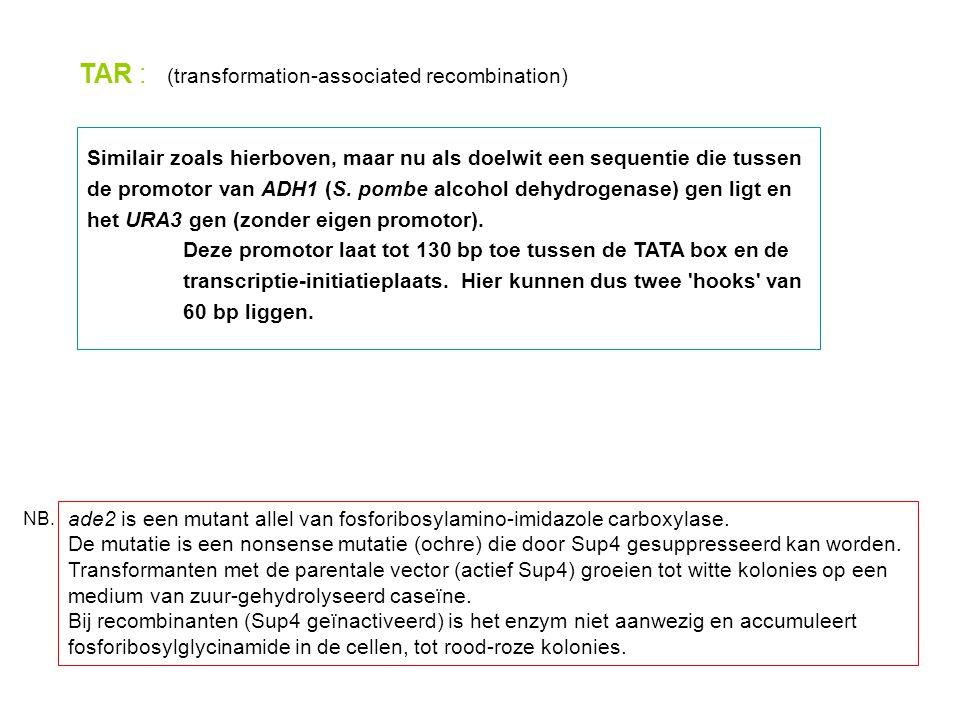 TAR : (transformation-associated recombination)
