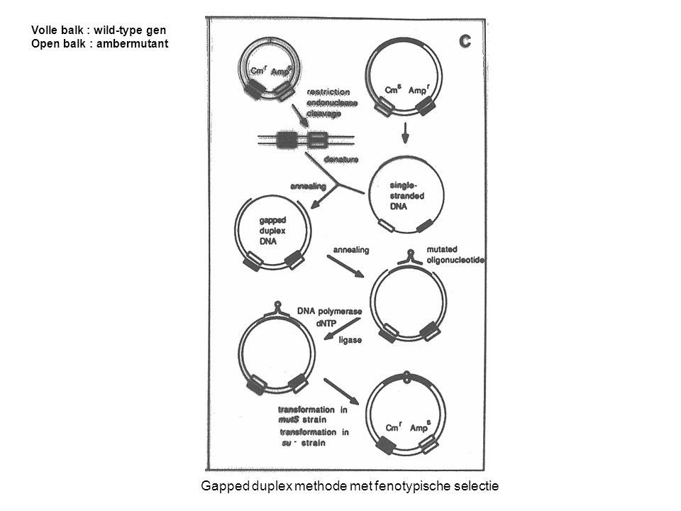 Gapped duplex methode met fenotypische selectie