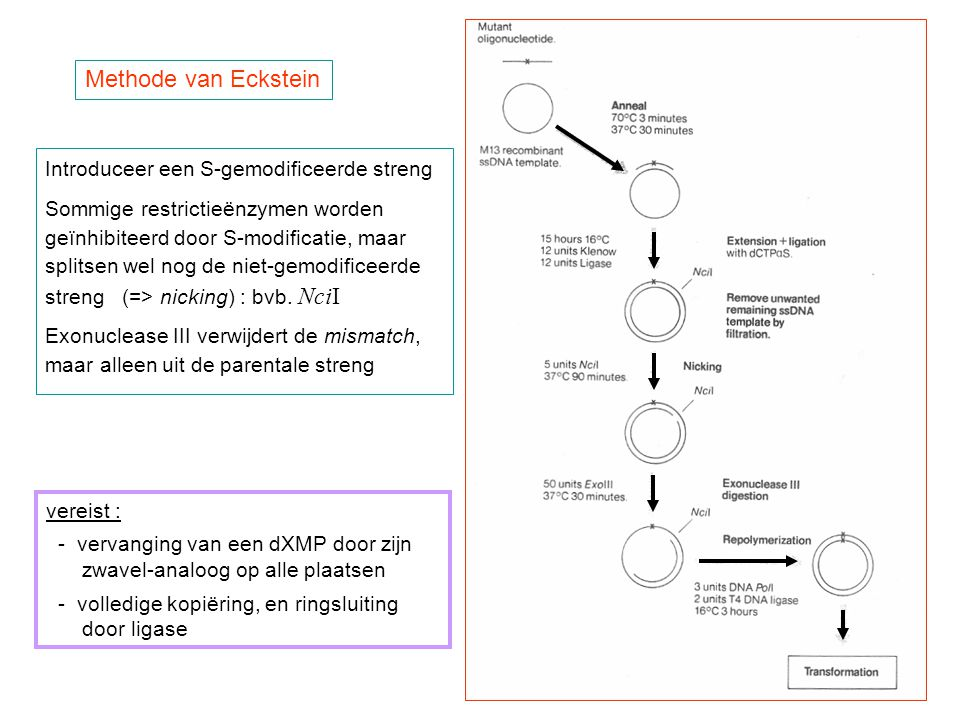 Methode van Eckstein Introduceer een S-gemodificeerde streng