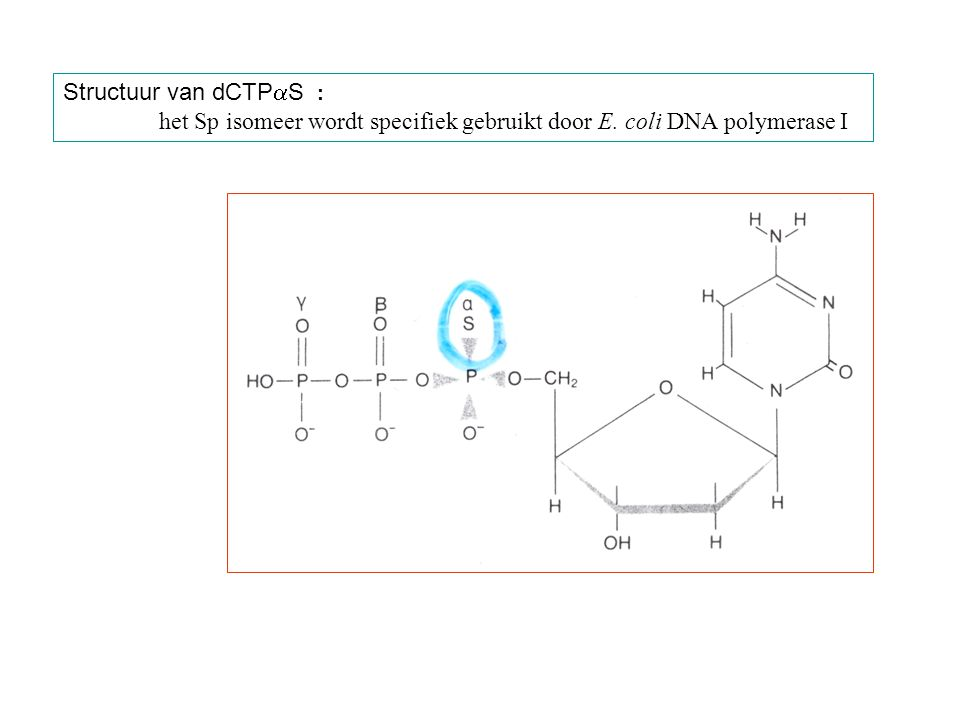 Structuur van dCTPaS : het Sp isomeer wordt specifiek gebruikt door E. coli DNA polymerase I
