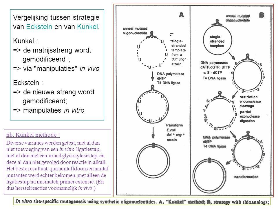 Vergelijking tussen strategie van Eckstein en van Kunkel. Kunkel :
