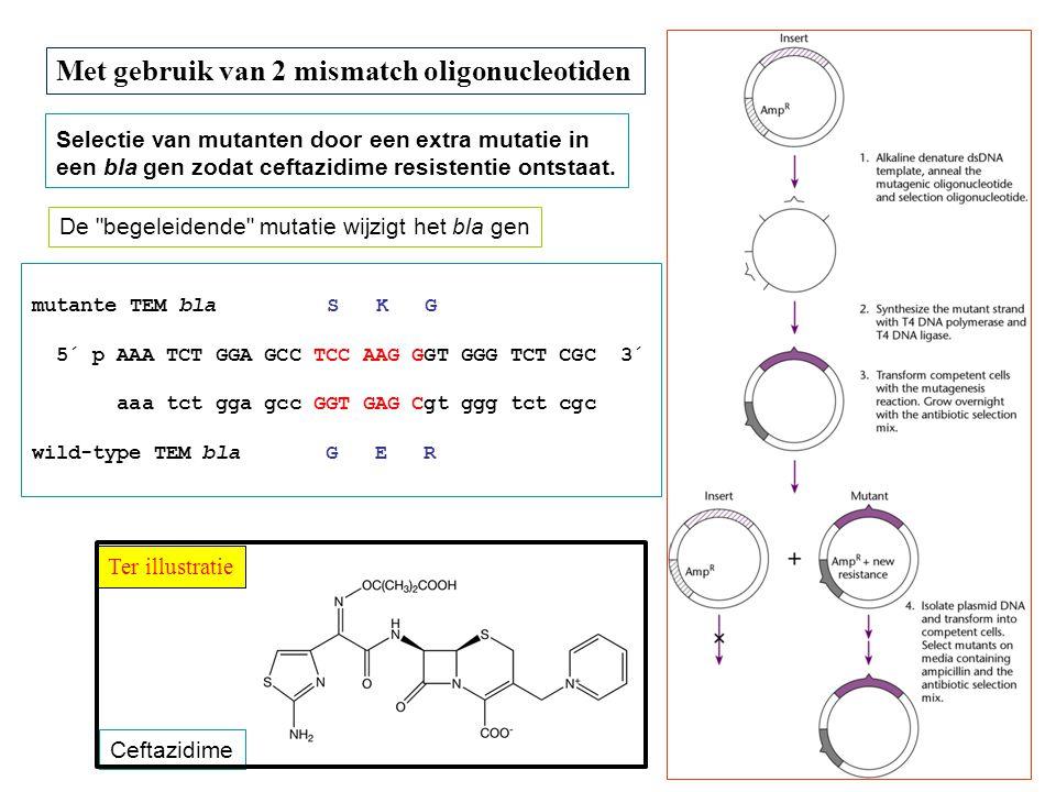 Met gebruik van 2 mismatch oligonucleotiden